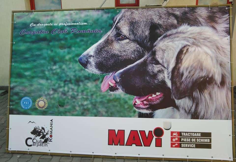 Parteneriat de imagine Carpatin Club Romania- Mavi Reghin